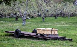 Colmenas de la abeja en una huerta Fotografía de archivo