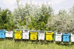 Colmenas de la abeja en verano Fotos de archivo