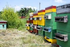 Colmenas de la colmena en el colmenar Abejas crecientes para conseguir la miel Casas de abeja Imagenes de archivo