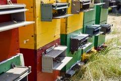 Colmenas de la colmena en el colmenar Abejas crecientes para conseguir la miel Casas de abeja Fotos de archivo libres de regalías