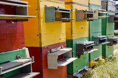 Colmenas de la colmena en el colmenar Abejas crecientes para conseguir la miel Casas de abeja Imagen de archivo libre de regalías
