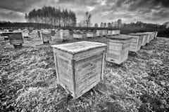Colmenas de madera Foto de archivo