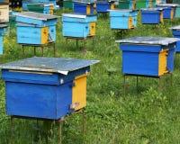 Colmenas de madera brillantes de la abeja de Pined Foto de archivo