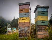 Colmenas de madera coloridas de la abeja Imagenes de archivo