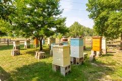 Colmenas de madera de la abeja en Cinder Blocks Imagen de archivo libre de regalías