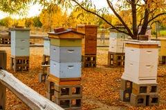 Colmenas de madera envejecidas de la abeja en Autumn Setting Fotografía de archivo