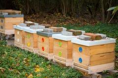 Colmenas de madera de la abeja Imagen de archivo