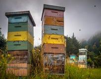 Colmenas de madera de la abeja del vintage colorido Imágenes de archivo libres de regalías