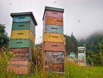 Colmenas de madera multicoloras de la abeja Imágenes de archivo libres de regalías