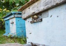 Colmenas de madera oxidadas azules con las abejas de la miel Imagen de archivo libre de regalías