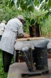 Colmenas de proceso de los apicultores con las abejas de la miel fotografía de archivo libre de regalías