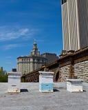 Colmenas del tejado en New York City Fotografía de archivo libre de regalías