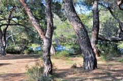 Colmenas en bosque Foto de archivo