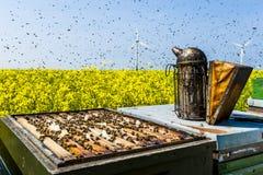 Colmenas en campo de la rabina con el enjambre de la abeja Imagen de archivo libre de regalías