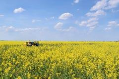 Colmenas en campo floreciente del canola durante primavera Fotografía de archivo libre de regalías