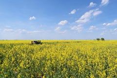 Colmenas en campo floreciente del canola durante primavera Imagenes de archivo