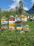 Colmenas en el ajuste alpino Foto de archivo libre de regalías