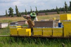 Colmenas en el colmenar con las abejas Casa para las abejas Cultivo de la abeja Foto de archivo libre de regalías