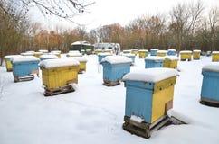 Colmenas en el colmenar cubierto con nieve Foto de archivo