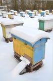 Colmenas en el colmenar cubierto con nieve Fotografía de archivo libre de regalías