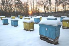 Colmenas en el colmenar cubierto con nieve Imagen de archivo libre de regalías