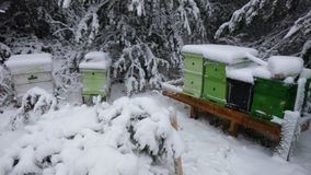 Colmenas en el invierno cubierto con nieve profunda Imagen de archivo