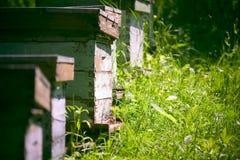 Colmenas en el jardín imagen de archivo libre de regalías