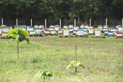 Colmenas en granja de la abeja Fotos de archivo libres de regalías