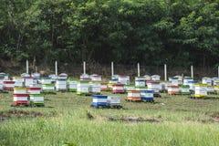 Colmenas en granja de la abeja Imagen de archivo libre de regalías