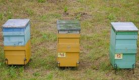 3 colmenas en hierba verde Fotografía de archivo