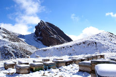 Colmenas en la nieve   Imágenes de archivo libres de regalías