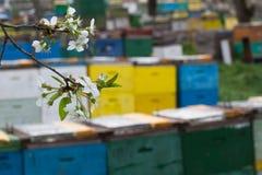 Colmenas en la primavera Fotos de archivo