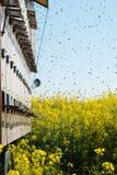 Colmenas en los campos de la violación de semilla oleaginosa Imágenes de archivo libres de regalías