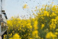 Colmenas en los campos de la violación de semilla oleaginosa Fotografía de archivo