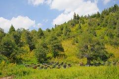 Colmenas en montañas Imagen de archivo