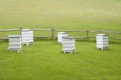 Colmenas en prado verde Fotografía de archivo