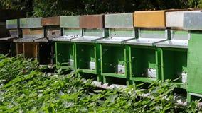Colmenas en un campo de la apicultura Foto de archivo
