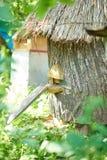 Colmenas en un colmenar al aire libre Foto de archivo libre de regalías