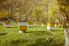 Colmenas en un colmenar con las abejas Imagenes de archivo