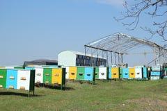 Colmenas en un colmenar con volar de las abejas Apicultura Imágenes de archivo libres de regalías