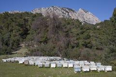 Colmenas en un prado de la montaña Imagen de archivo