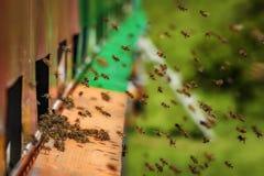 Colmenas en una caravana - colmenar del carro con las abejas que vuelan al landi Imágenes de archivo libres de regalías