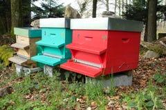 Colmenas europeas de la abeja Imagenes de archivo