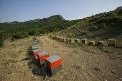 Colmenas para la miel en las montañas Fotografía de archivo