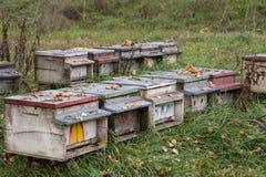 Colmenas para la producción de la miel Imagen de archivo