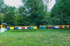 Colmenas tradicionales de la abeja en el bosque, Eslovenia Fotografía de archivo