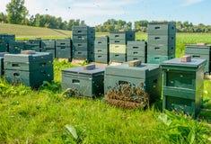 Colmenas verdes con las abejas en largas colas Foto de archivo libre de regalías