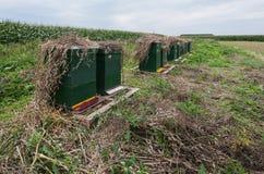 Colmenas verdes de la abeja en fila a lo largo de un campo Foto de archivo libre de regalías