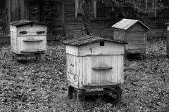 Colmenas viejas de la abeja en otoño en blanco y negro Foto de archivo