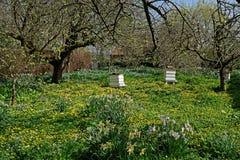 Colmenas viejas de la abeja en una huerta Imagen de archivo libre de regalías